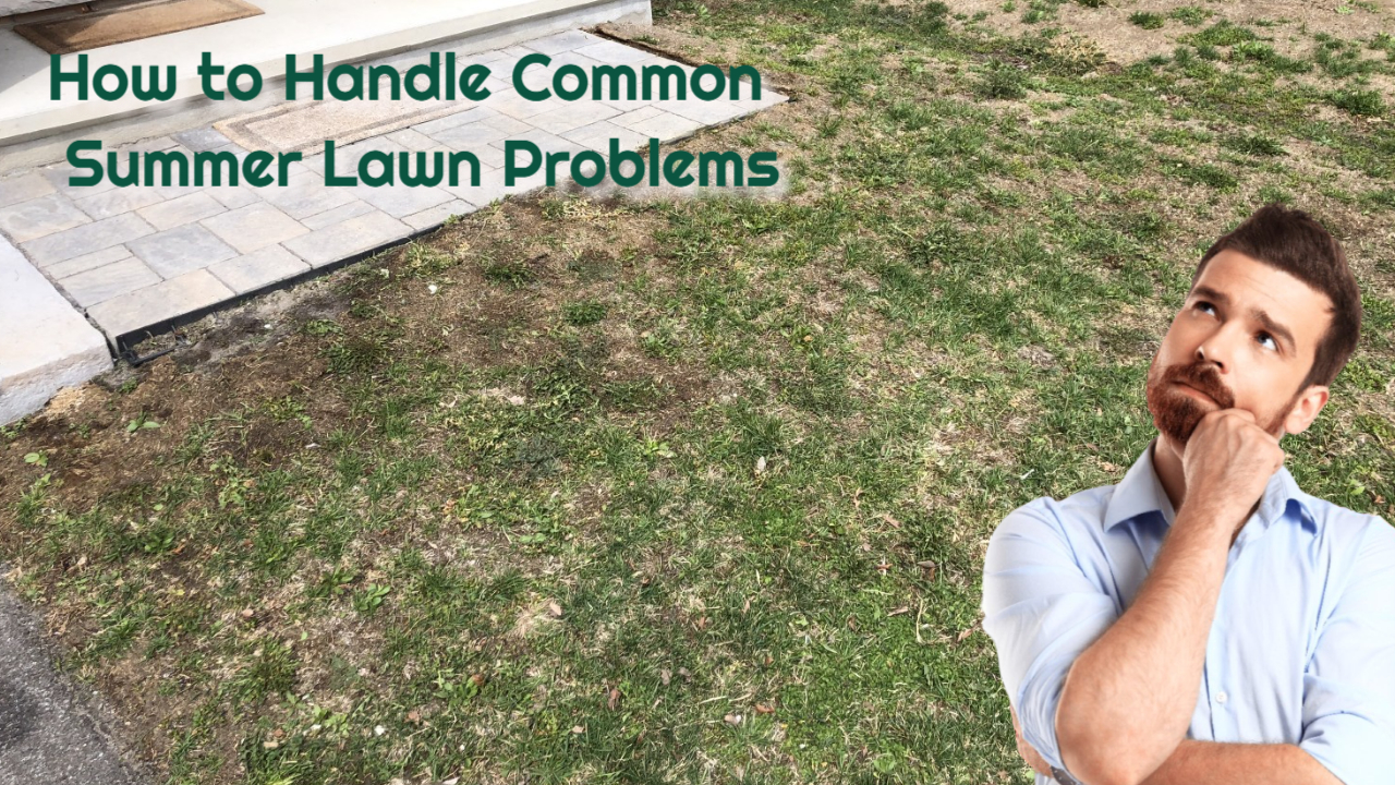 How to Handle These Common Summer Lawn Problems