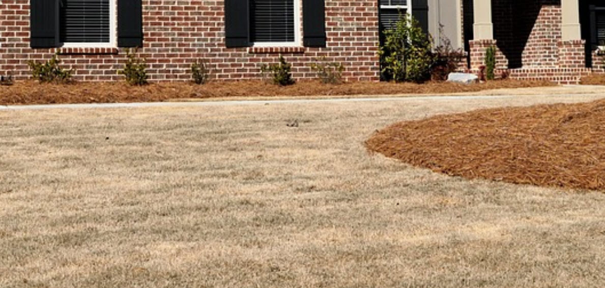 Lawn Care During Drought - How to Help Your Yard
